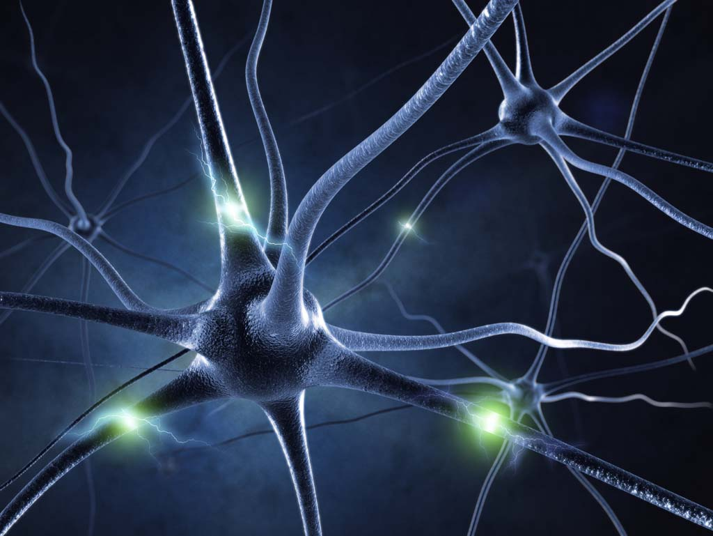 Many Neurons in the human body